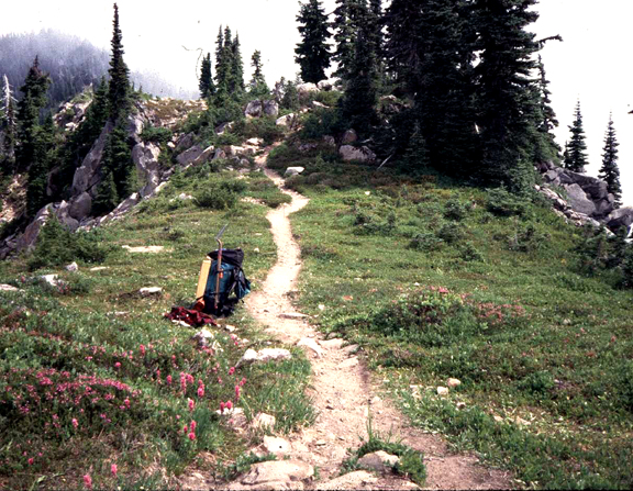 A trail weaves up into a rocky landscape, with tall pines on one side and beautiful pink flowers on te other.  A lone backpack rests by the trail.